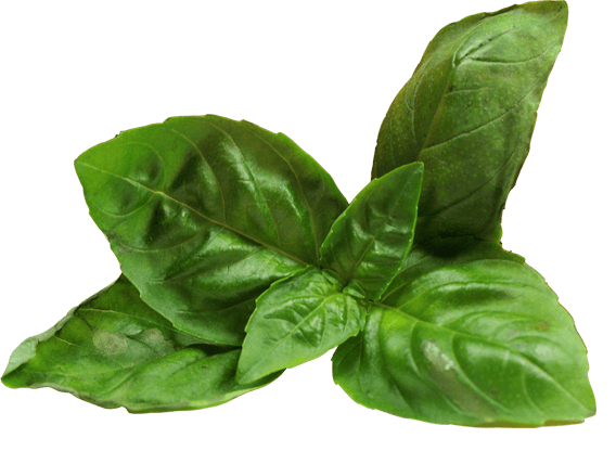 Kaptain-Foods-Leaf (1) (2)